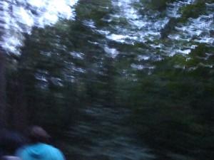 Reynolds Woods 3