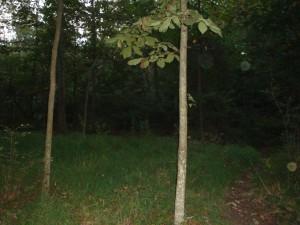 Reynolds Woods Orbs - 2