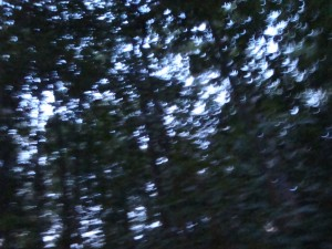 Reynolds Woods 1